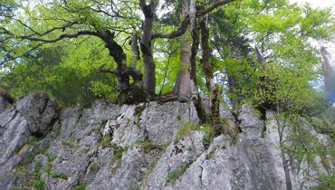 Adventure Tour - Forest as a Source of Power - Kufstein