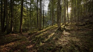 Slowing down & 'Forest bathing' - Thiersee