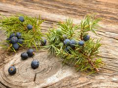 Culinary route - Thiersee juniper